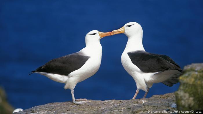 Mr & Mrs Albatross
